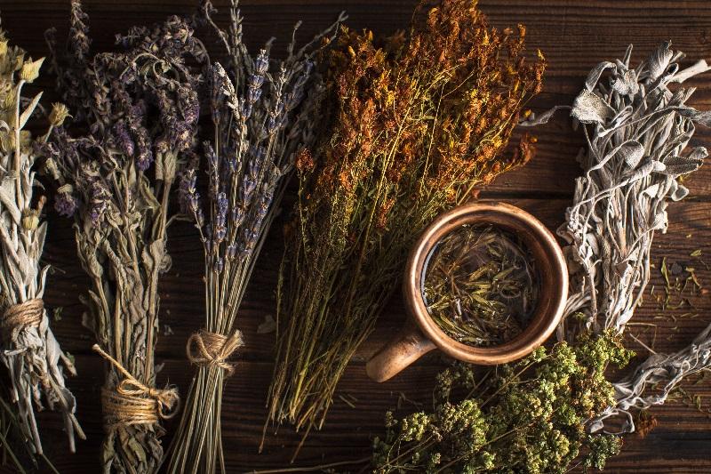 Conjunto formado por vários ramos de ervas, ao lado de uma xícara de chá de ginsen. É um exemplo de como usar a fitoenergética.