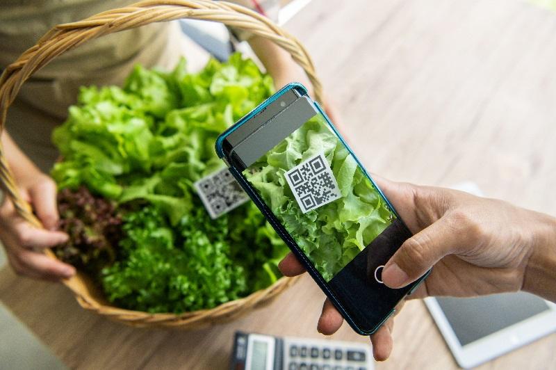 Cliente aponta o celular para um pé de alface que está com o código de barras e assim vai fazer o pagamento por aproximação.