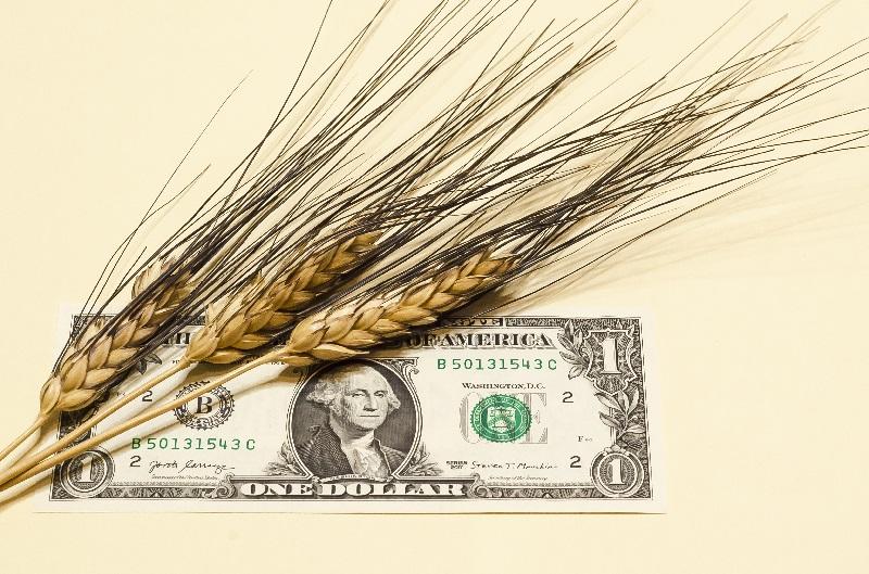Preço do arroz está ligado com a cotação do dólar.